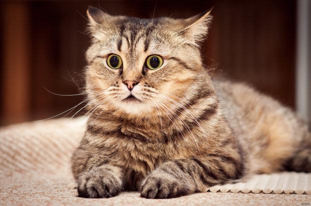 Шок, страх и недоумение: в сети показали реакцию кота, незаметно пробравшегося в ванную к хозяйке