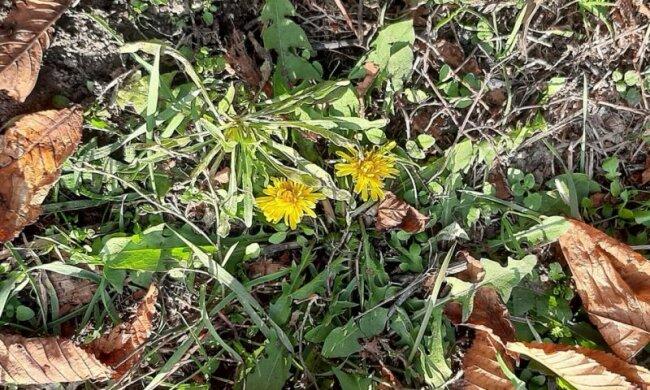 Квіти, фото: соціальні мережі