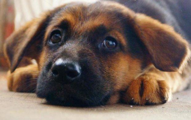 Фото с умирающим щенком стало вирусным