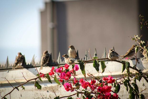 Птицы, фото pxhere.com