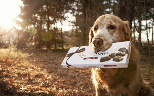 Студенты-ветеринары разделись ради благотворительности: фото