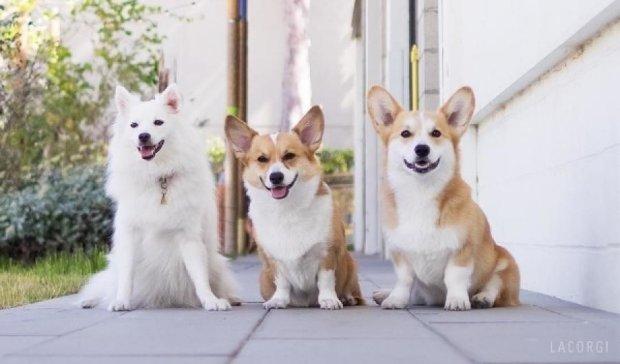 Підпишись: 10 собачих сторінок в Instagram