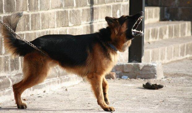 """Озвірілий киянин спустив на пенсіонера бійцівських псів. Просто """"не було настрою"""""""