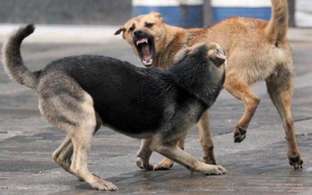 Живого місця не залишили: собаки розірвали українця на шматки