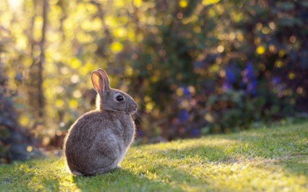 Под Черновцами пожарные спасли зайчонка: теперь он живет в розовой клетке и пьет молочко из пипетки
