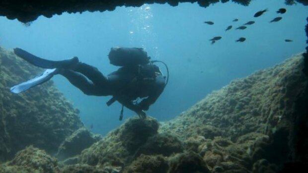 Гигантская ядовитая тварь устроила аквалангисту проверку на прочность: фото не для слабонервных
