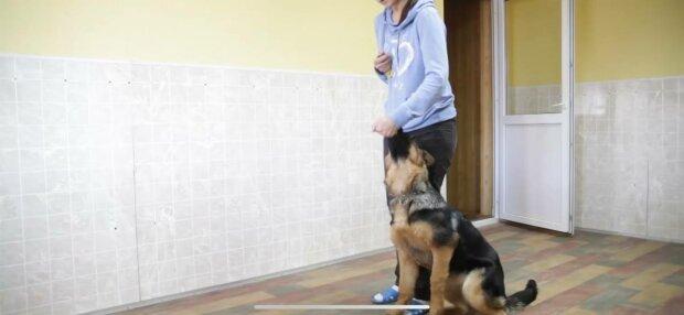 Вигул собаки, фото: скріншот з відео