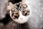 Підлітки викинули кота з багатоповерхівки заради лайків: відео юних шкуродерів вразило українців