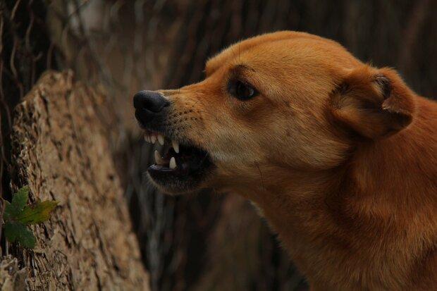 В Харькове хозяин натравил пса на прохожих, фото: Экспресс