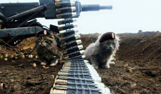 Военные показали легендарных котиков - Град и Угаран (фото)