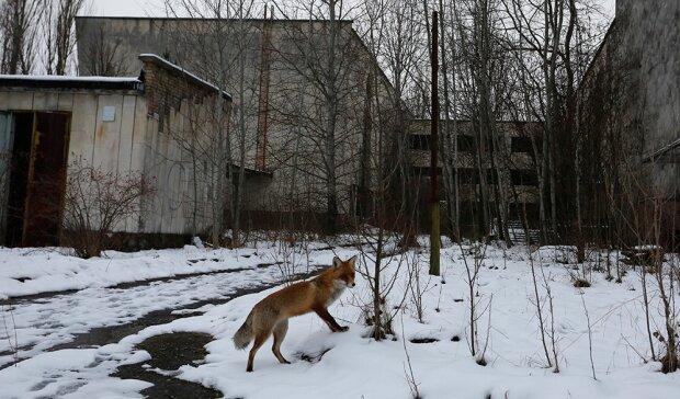 """Аномальная зима """"забрала"""" Чернобыль: всплыли невероятные кадры уникальным """"местных"""""""