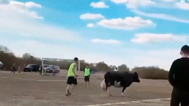 """Жвава корова вискочила на футбольне поле та записалася """"у нападники"""" - ліпить голи так, що Марадона позаздрить"""