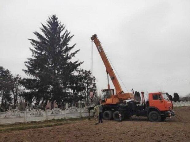 """У центрі міста встановили новорічну ялинку, українці в шоці: """"Вона ж з кладовища!"""""""