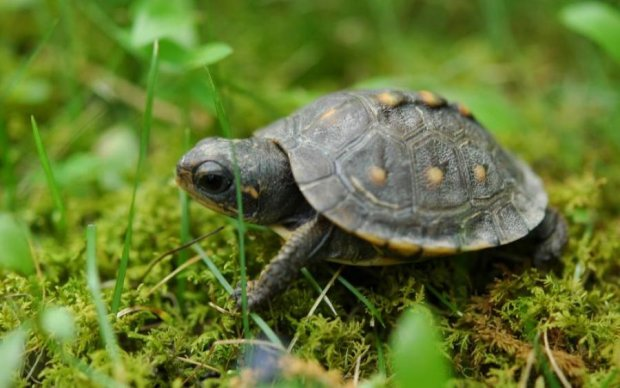Неадекват вкоротив собі дещо через любов до черепах