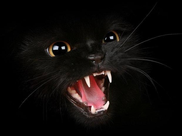 Розчиняється у повітрі, як дим: виявлена чорна кішка з надприродними здібностями