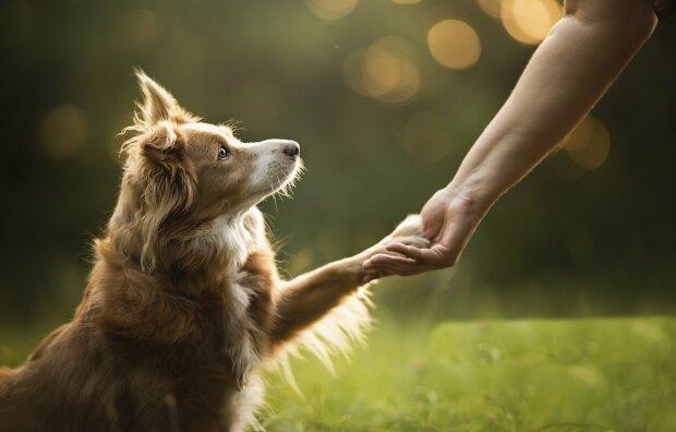 День домашних животных, фото: goodfon