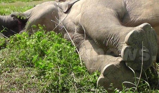 Почтовый поезд убил четырех слонов на Шри-Ланке