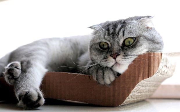 Чоловік відправив кота поштою. За це йому довелося сплатити штраф у розмірі 2000 доларів