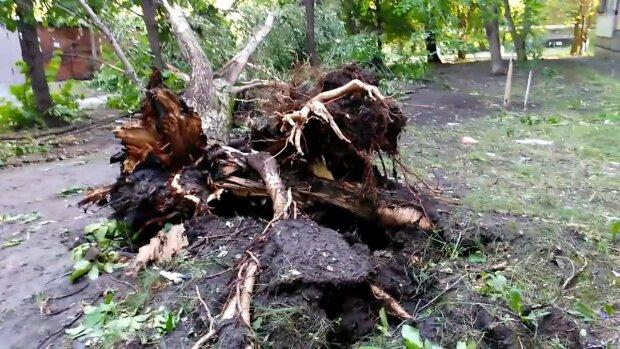 Деревья ломались, как спички: лютая стихия натворила беды в Виннице, - кадры постапокалипсиса