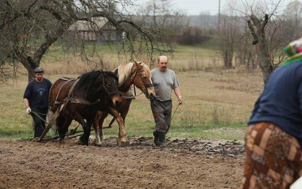Садок вишневий коло хати: як сільські менеджери відроджують українське село