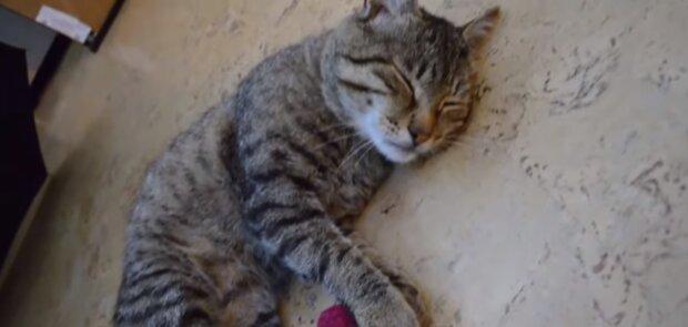 Котик, скриншот: Youtube