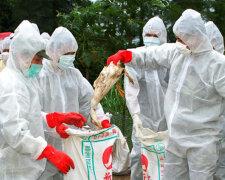 Птичий грипп: болезнь, симптомы, лечение, iran