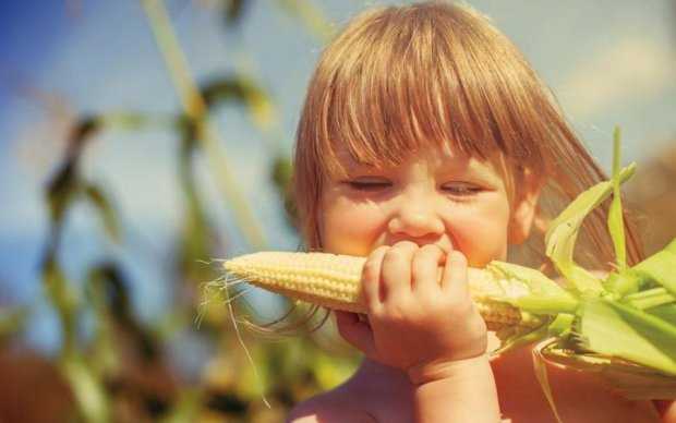 """""""Цариця полів"""" не для всіх: фахівці розповіли про шкідливість кукурудзи"""