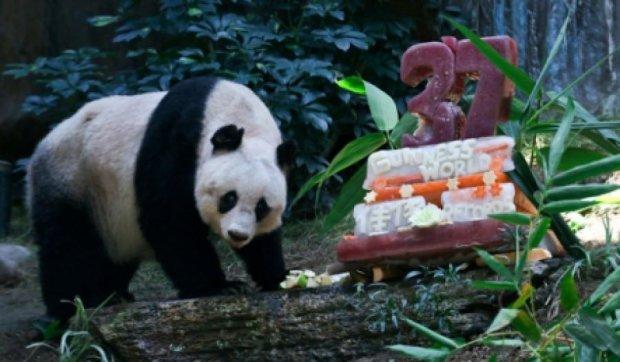 """Самая старая в мире панда """"отметила"""" 37 лет"""
