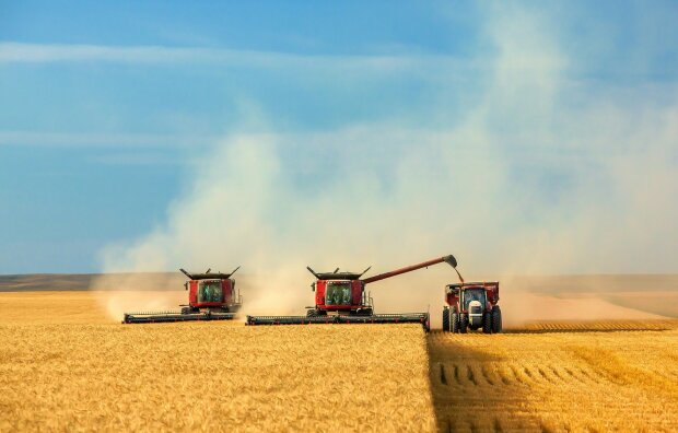 Не более 200 тысяч гектаров в одни руки: кому и как будут раздавать землю в Украине