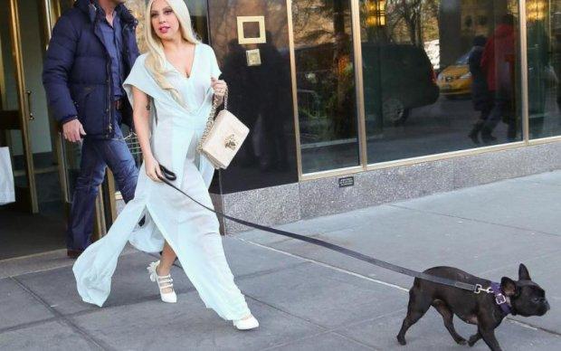 Леді Гага та Ді Капріо зіпсували життя французьким бульдогам