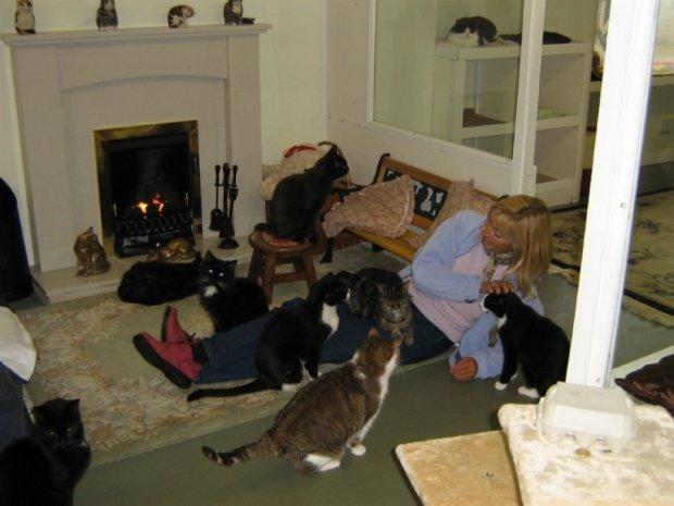 В Британії відкрили будинок для престарілих котів