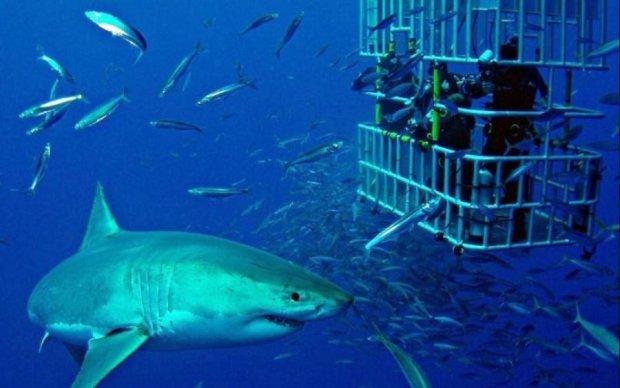 Модель вирішила сфотографуватися з акулами і поплатилася за це