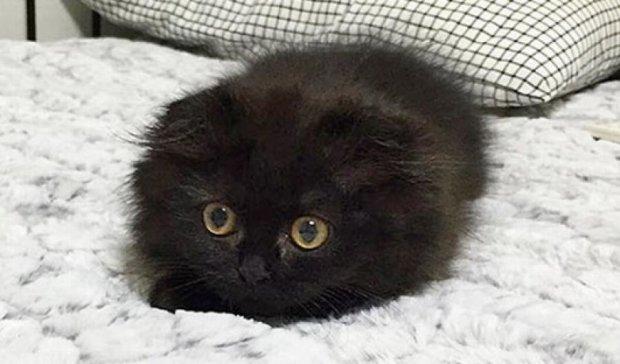 Как коты гипнотизируют своим взглядом (фото)