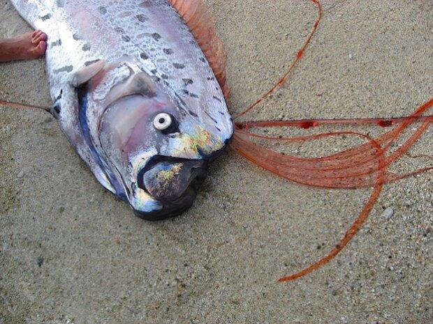 Предвестники апокалипсиса: глубоководные рыбы выбрасываются на берега Японии, ученые взволнованы