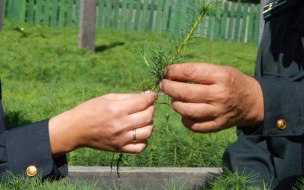 Реформа лісового господарства: Україна наближається до європейських норм