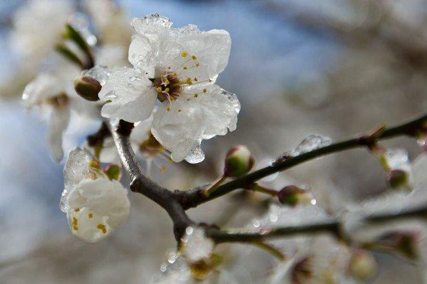 Стихия готовит украинцам морозный подарок, уже не до шуток: о весне забудьте