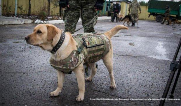Волонтеры привезли бронежилеты для собак в зону АТО (видео)