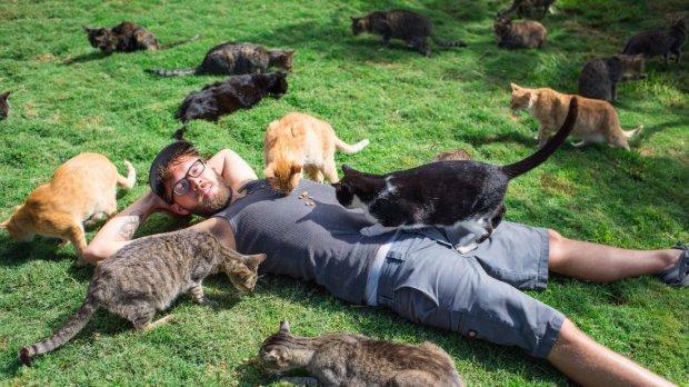 Рай для сильных и независимых: крохотный остров на Гаваях, где обитают одни кошки