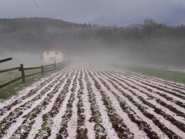 """На Львовщине засекли природную аномалию, такого не ожидал никто - """"снег"""" в разгар лета"""