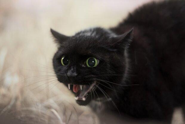 Господар кумедно помстився коту, який позбавив його сну: реакція пухнастика безцінна, відео