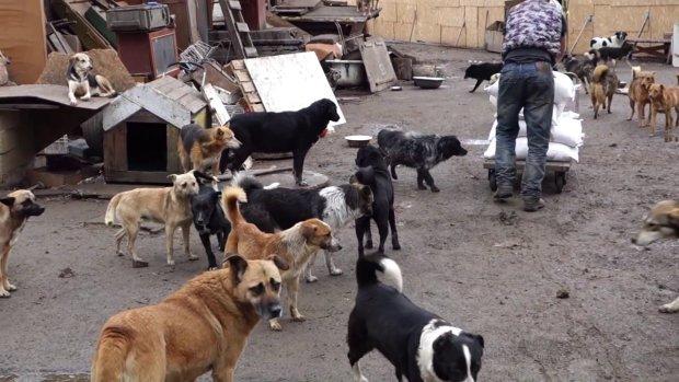 Одесса на грани катастрофы: улицы завалены смертельной отравой