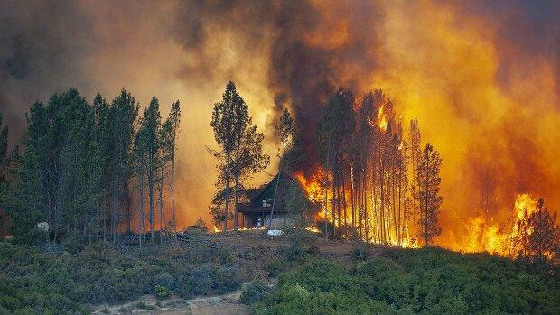 Шашлики з наслідками: під Києвом відпочинок закінчився лісовою пожежею