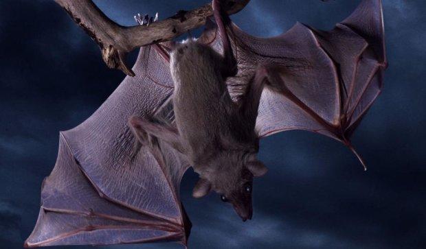 Ученые открыли необычные способности летучих мышей