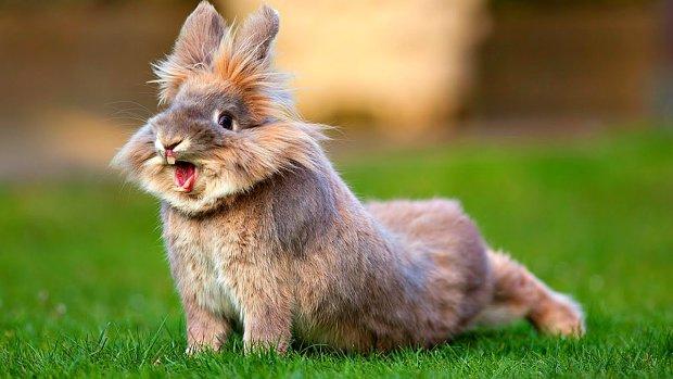 Досить убивати двох зайців: захисники тварин запропонували змінити мову