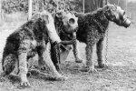 Собаки під час війни, фото з вільних джерел