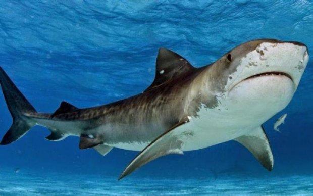 Безстрашні туристи зробили заплив з найбільшою акулою світу: захопливе відео