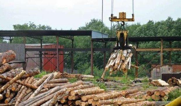 Волинських лісівників перевірять на причетність до контрабанди