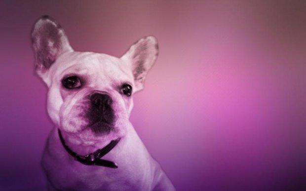 Собачий бизнес: сеть возмутили издевательства россиян над животными
