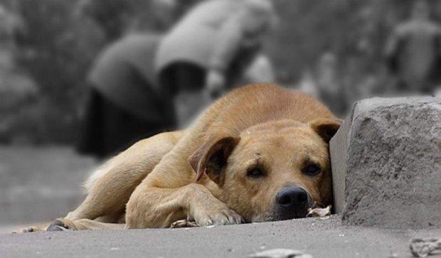 Во Львове сделают «досье» на каждого бездомного пса