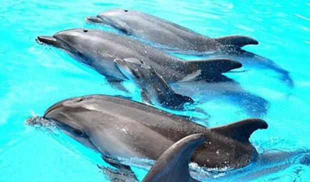 У харківському дельфінарії сталося диво - народилось дельфінятко